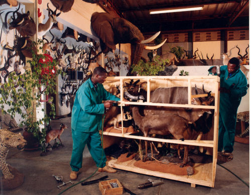 Wildlife Trophy | Taxidermy Wildlife scene - South Africa | Taxidermy For The Hunting Enthusiast