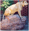 taxidermy hunting enthusiast hunter trophy taxidermy wall mounts south africa